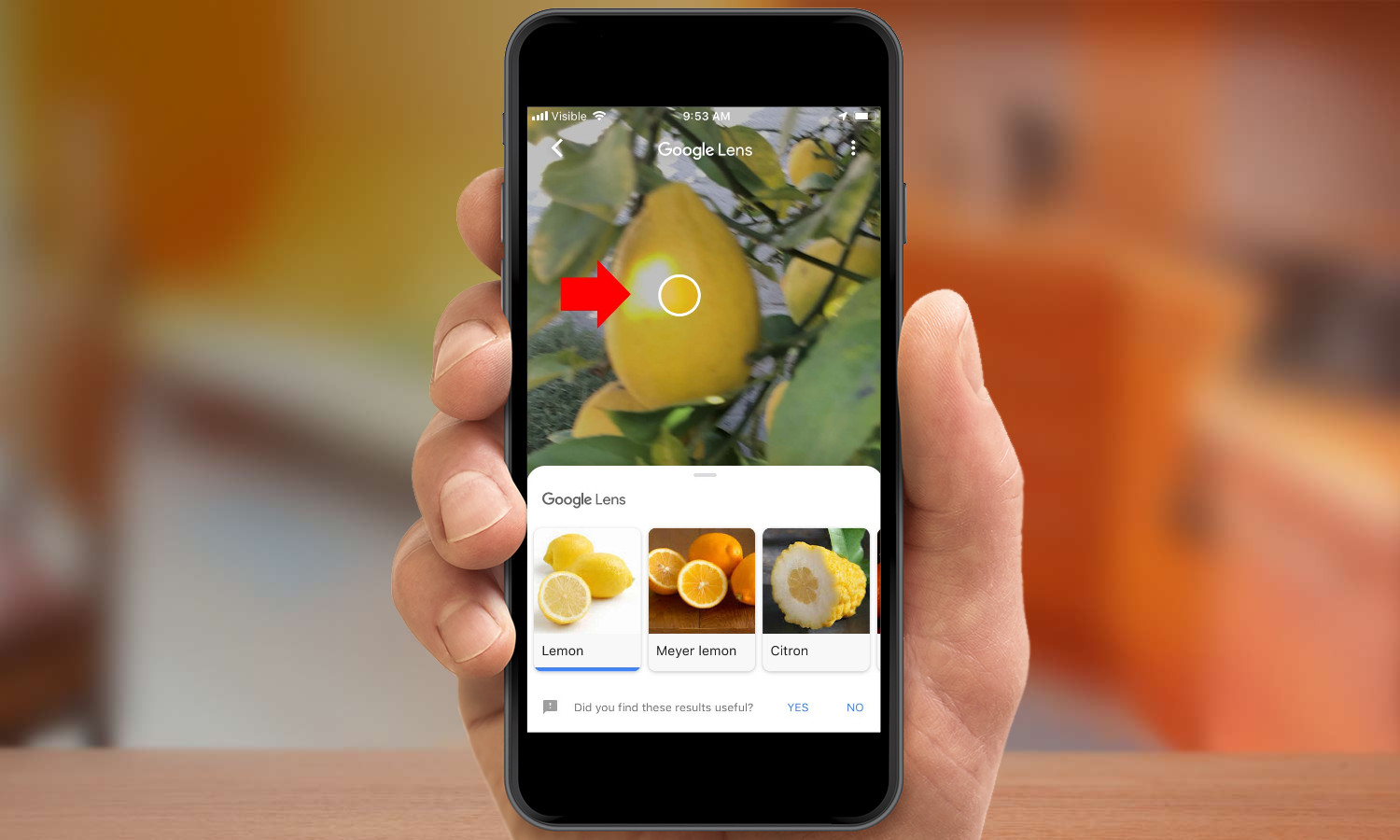How to Use Google Lens on the iPhone | Tom's Guide