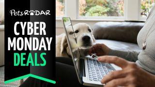 Cyber monday pet deals at Amazon