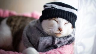 Cat lying in cat bed wearing hat and scarf