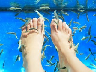Fish nibble the dead skin off feet during fish pedicures.