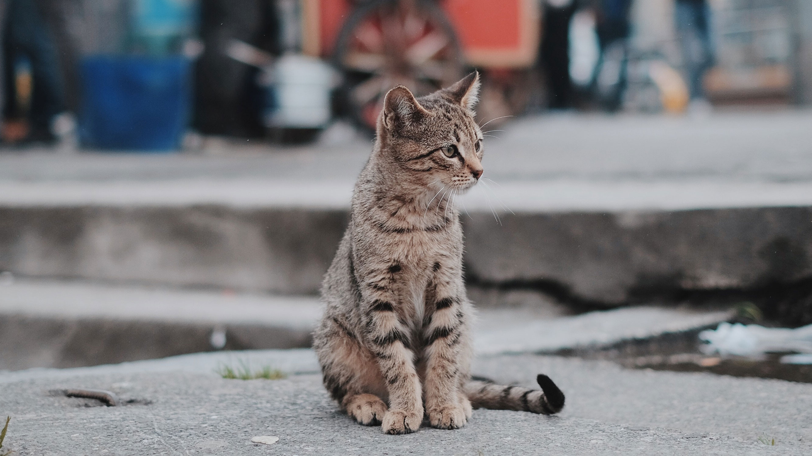 Picture of cat on pavement