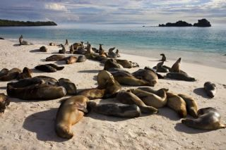 9-galapagos-sea+lions-110420-02