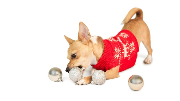 New puppy: Cute festive dog with baubles