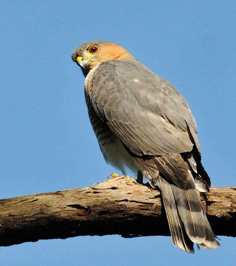 In Photos Birds Of Prey Live Science