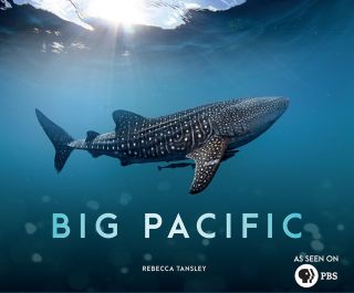 Mysterious Sea Creatures Surface in 'Big Pacific' | Live Science