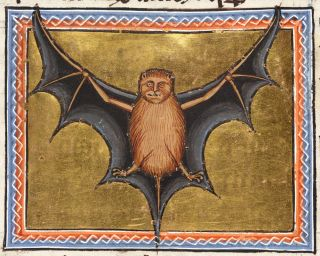 "The illustration of the bat ""is a fairly accurate ventral view of a bat whose wings are shown as a membrane stretching from its three fingers down to its toes and tail,"" according to <a href=""https://www.abdn.ac.uk/bestiary/ms24/f51v"">the University of Ab"