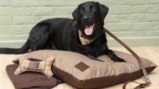 queen elizabeth pets range from Sandringham Estate