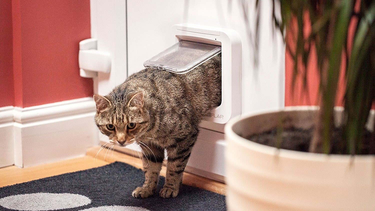 The Best Smart Cat Flaps Added Security For You And Your Furry
