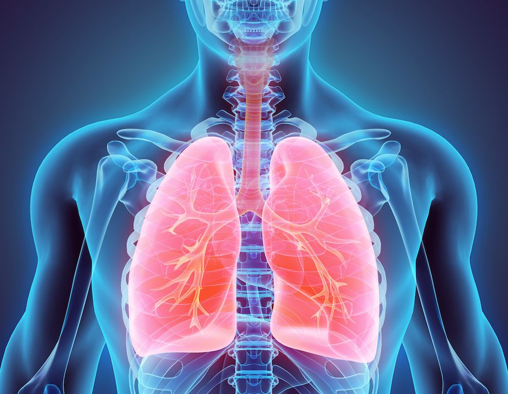 Respiratory System: Facts, Function and Diseases | Live Science