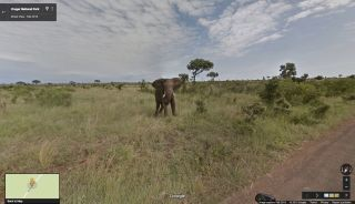 Google Maps view of an elephant in South Africa.