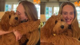 Adele's dogs with her on Instagram live session