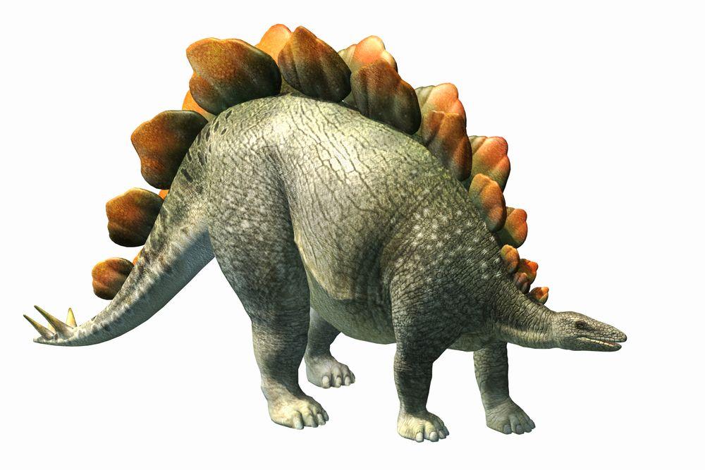 Stegosaurus: Bony Plates & Tiny Brain