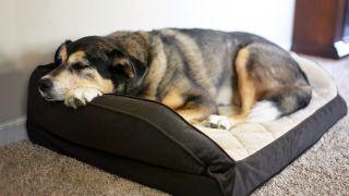 best dog bed mattress