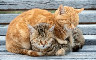Why do cats sleep so much? A ginger cat curled up on top of a tabby cat on a gray wooden bench, both with their eyes closed