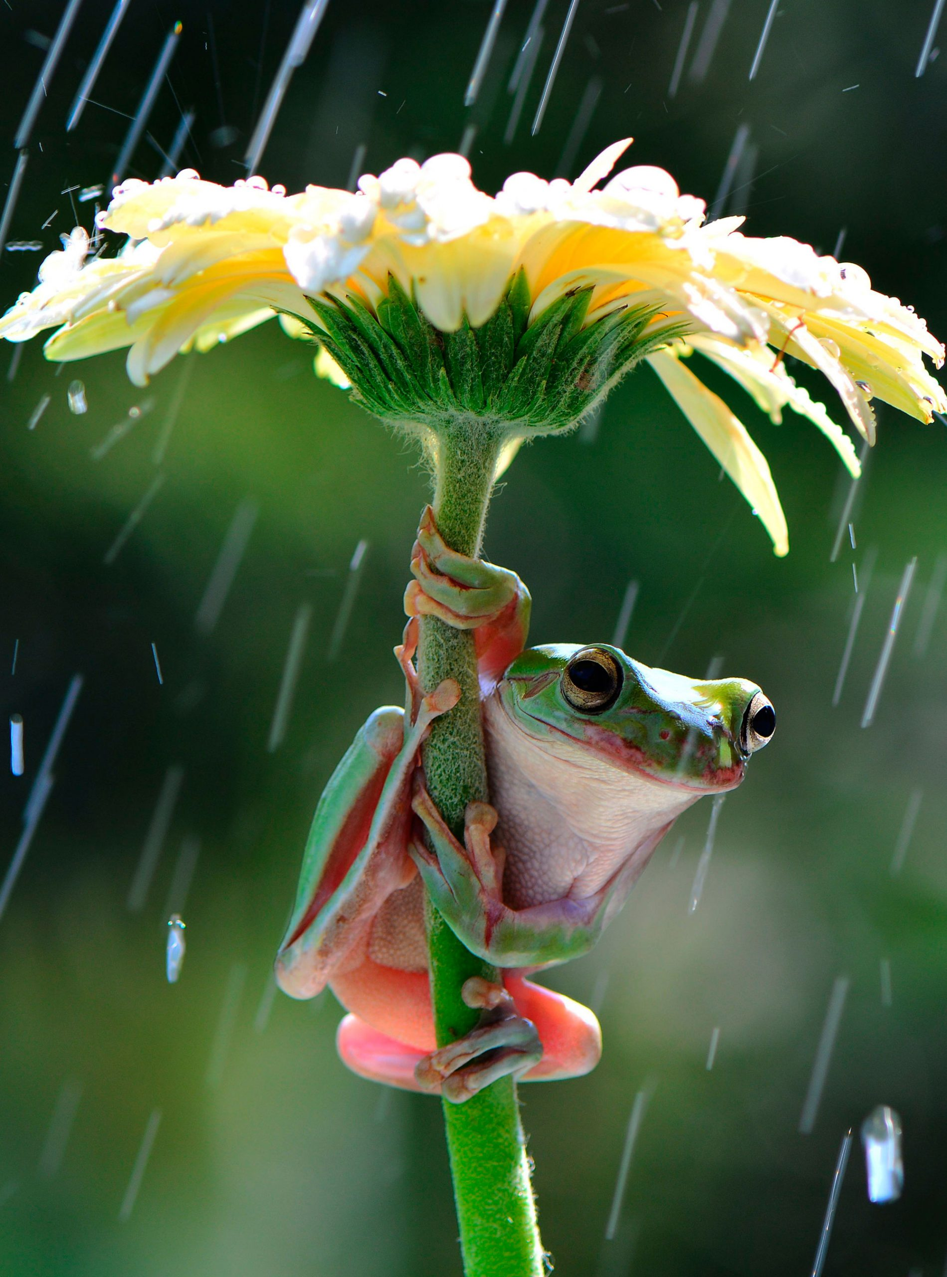 Frod in rain photo
