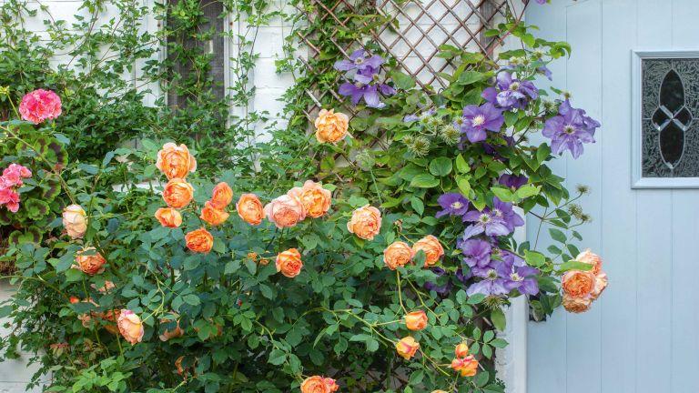 flowery trellis ideas for gardens