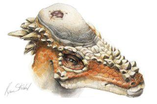 Horny-domed dinosaur