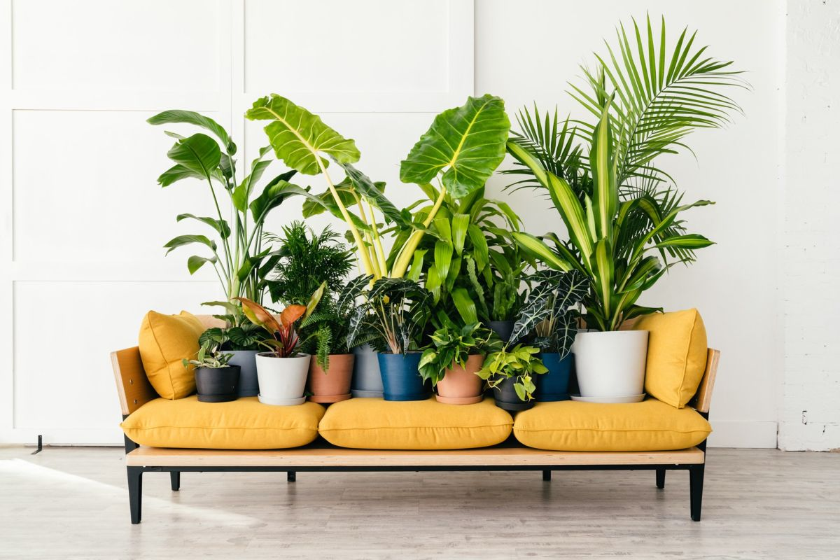 Your ultimate guide to house plants