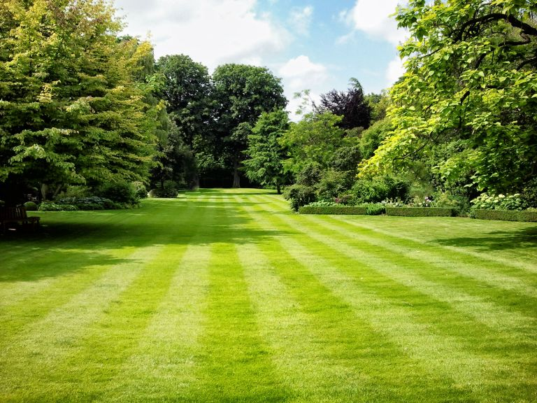 How to scarify a lawn: striped lawn