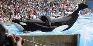 SeaWorld Whale Tilikum Has Died