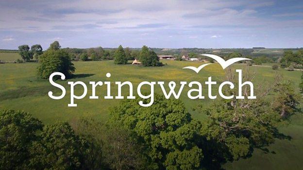 Springwatch