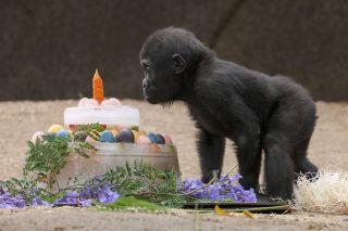 critically endangered animals, San Diego Zoo Safari Park