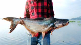 Man holding a caught catfish