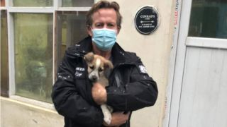 nowzad rescue afghanistan animal charity founder Pen Farthing