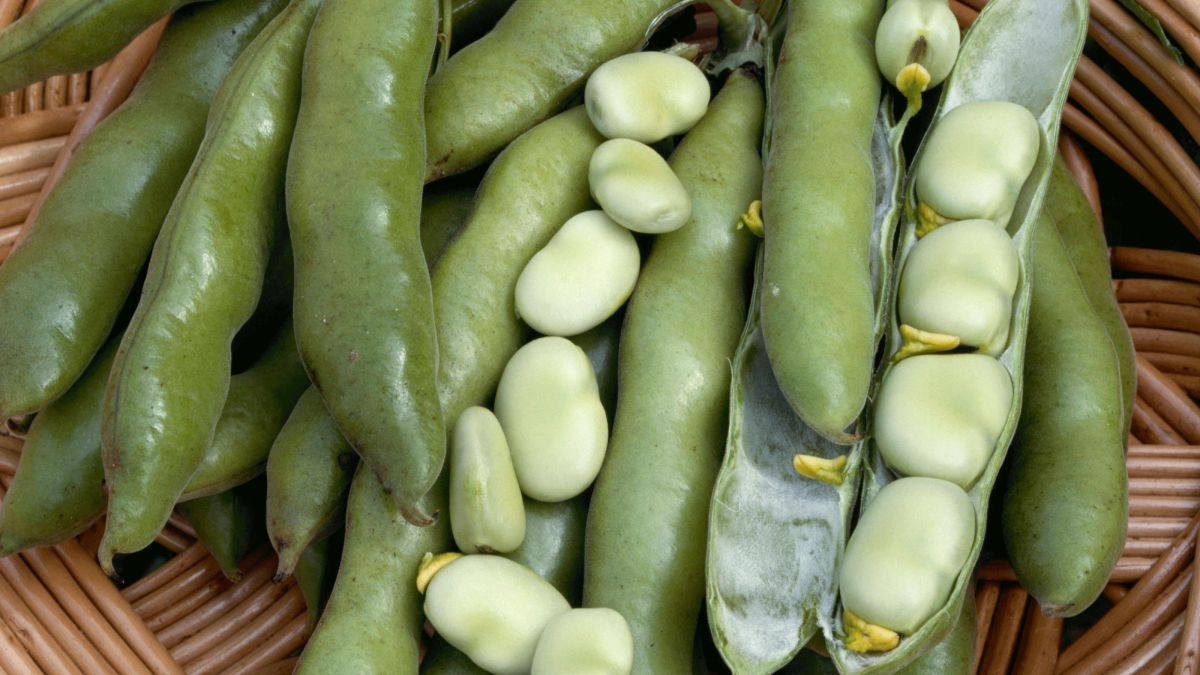 How to grow broad beans: add these low-maintenance crops to your veg plot