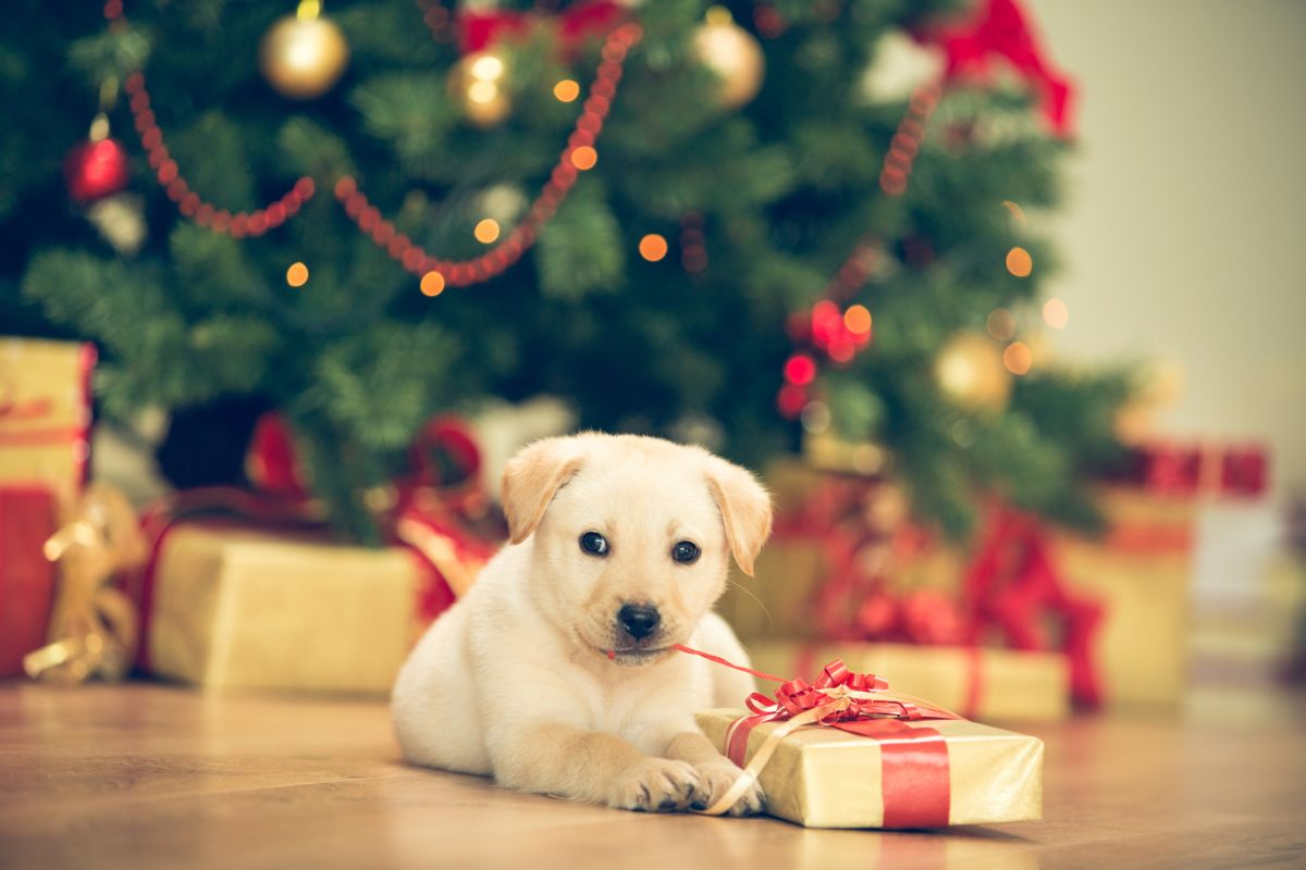 2020's must-have holiday gifts for pets, all on Amazon