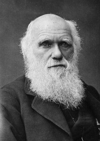 Darwin head shot