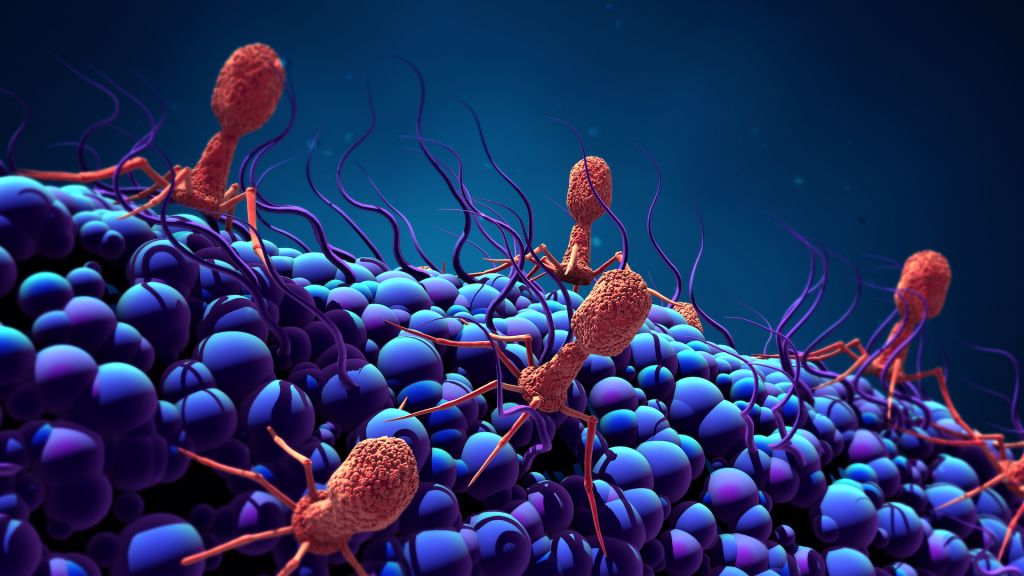 An illustration of bacteriophages invading a bacteria.