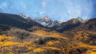The aspen trees turn golden in the autumn on Capitol Peak in Aspen