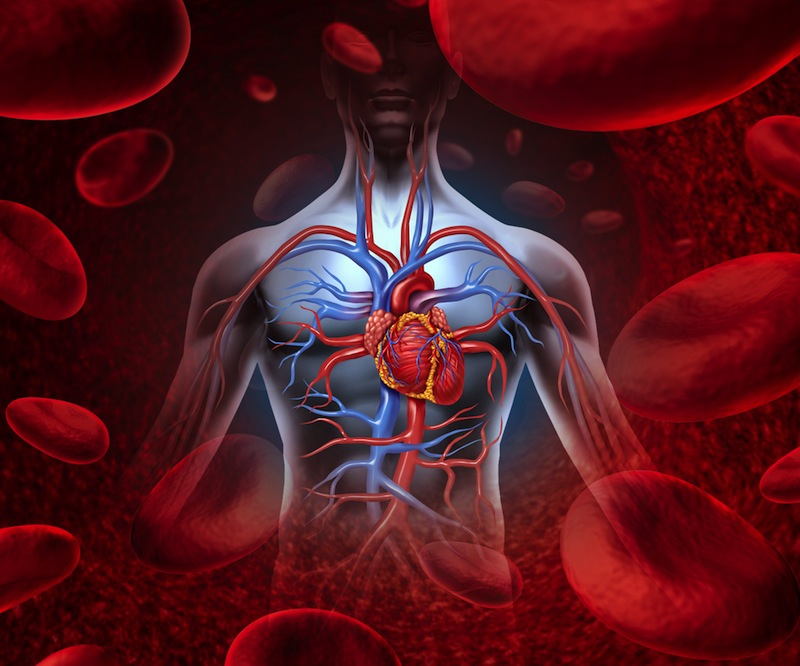 11 Surprising Facts About the Circulatory System | Live Science