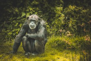 Can't go on a photography safari this year? Go ape with these tips to fill that void!