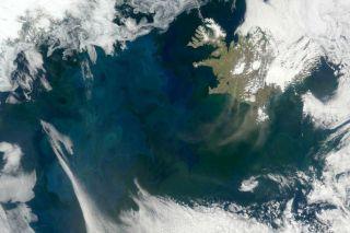 Plankton blooms in the North Atlantic.