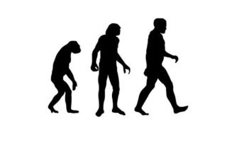 evolution, humans, primates, apes, why, how