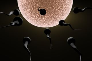sperm-and-egg-02