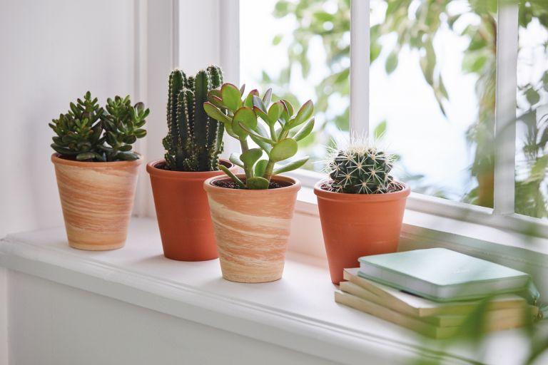 Aldi succulents