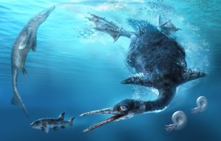 Two brothers in Japan happened upon the fossilized remains of the country's first and oldest fossil of a diving bird. The new species is named <em>Chupkaornis keraorum</em>.