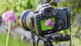 Home photography ideas: Frame-filling flower shots with a zoom lens