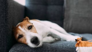 dry skin on dogs: causes and how to treat