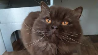 Ivan the Russian cat