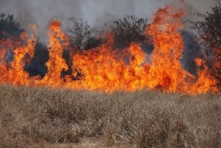 Wildfires like this one in Western cheatgrass could increase emissions of mercury.