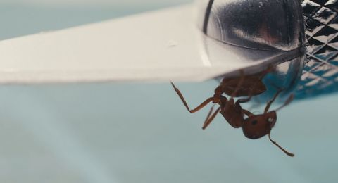 An ant in Masking Threshold