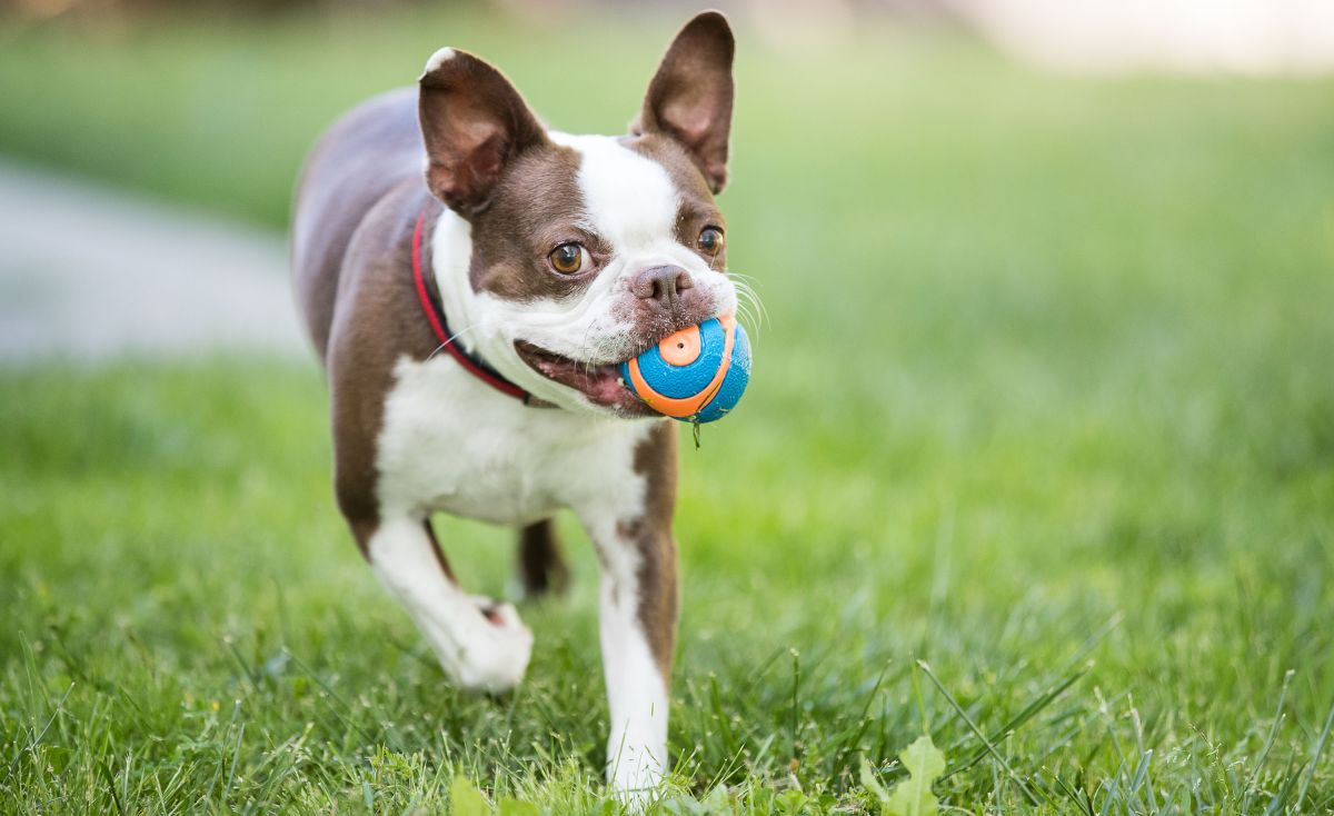 Best dog toys: 7 buys for playtime with your furry friend