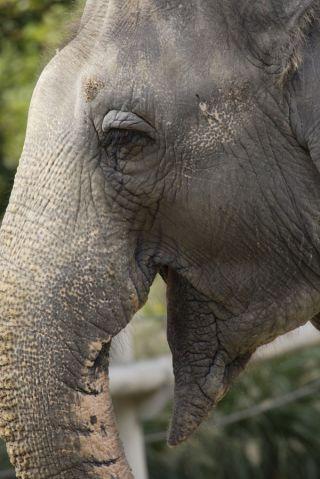 shanthi-asian-elephant-100924-02