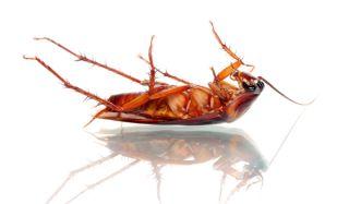 bug-dead-02