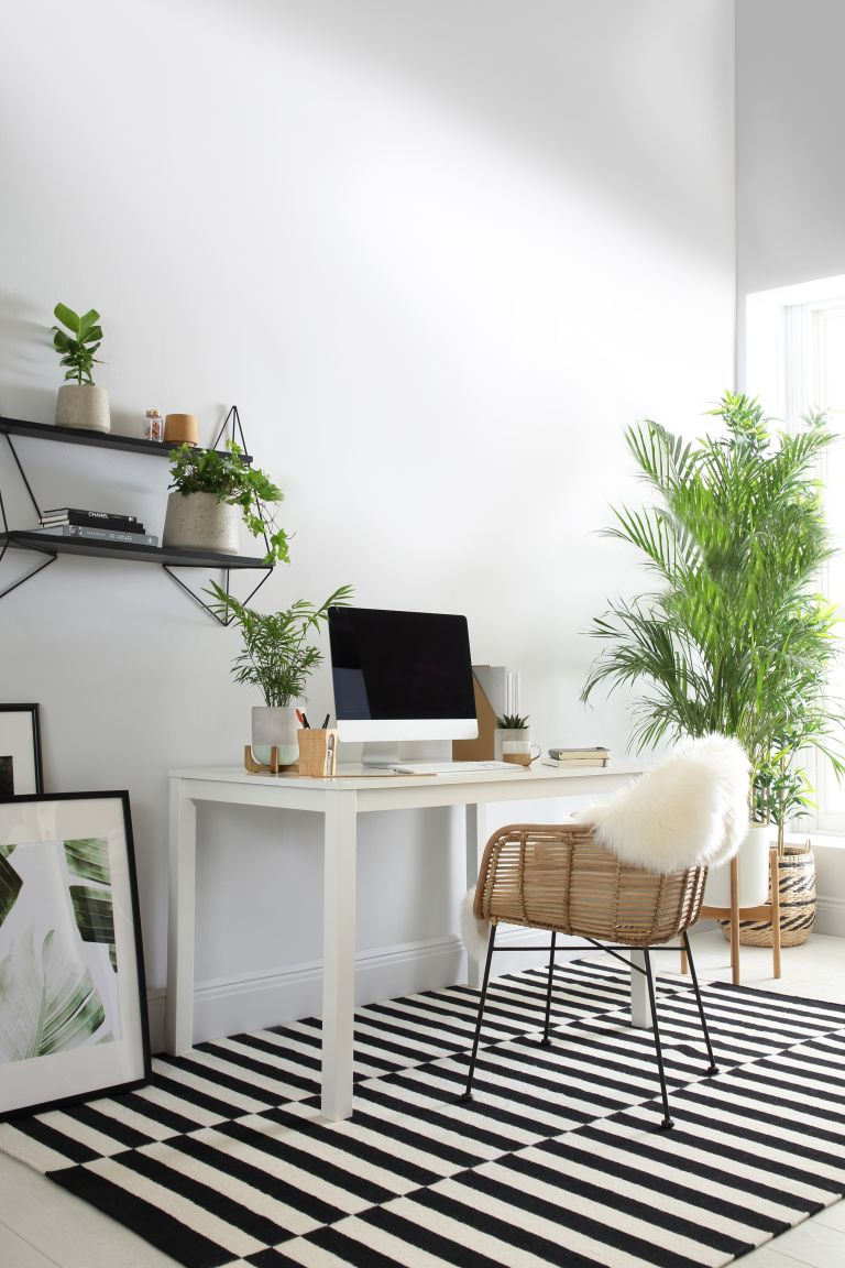best broadband deals: office space filled with various plants