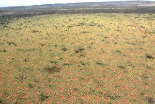 Aerial image of fairy circles in Australia